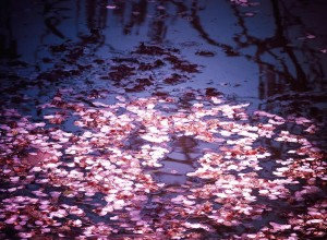 springs-embers--cherry-blossom-petals-on-the-surface-of-a-pond-vivienne-gucwa